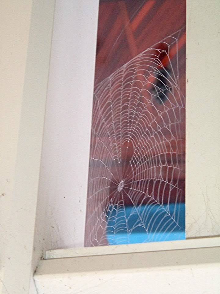 Hidden_Mickey_Spiderweb