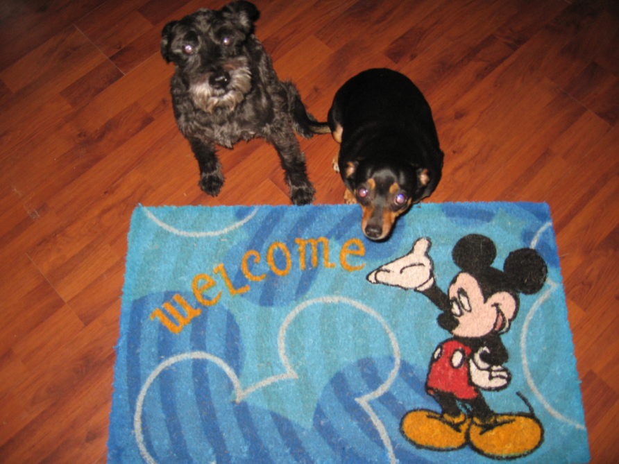 Disney's Best Friends Pet Care Swag Contest | Disney Every Day