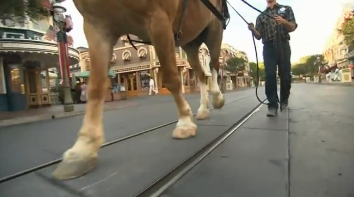 Main Street USA Disneyland Horse Video