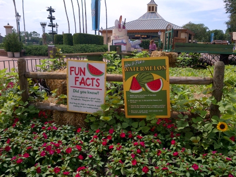 Fresh Harvest Watermelon Patch epcot food wine festival 2012
