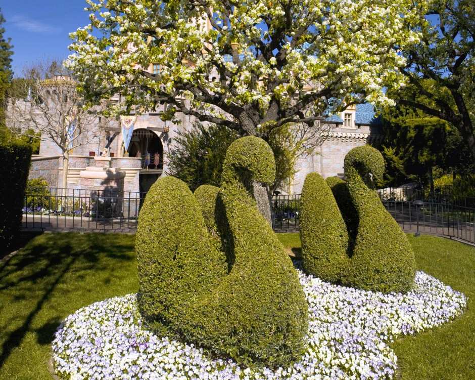 Disneyland Swan Topiaries
