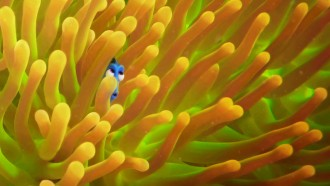 "Have You Seen Disney's Newest ""Finding Dory"" Movie Trailer"